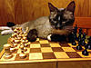 Click image for larger version.  Name:bols-cat-harry-2.jpeg Views:82 Size:118.2 KB ID:19882